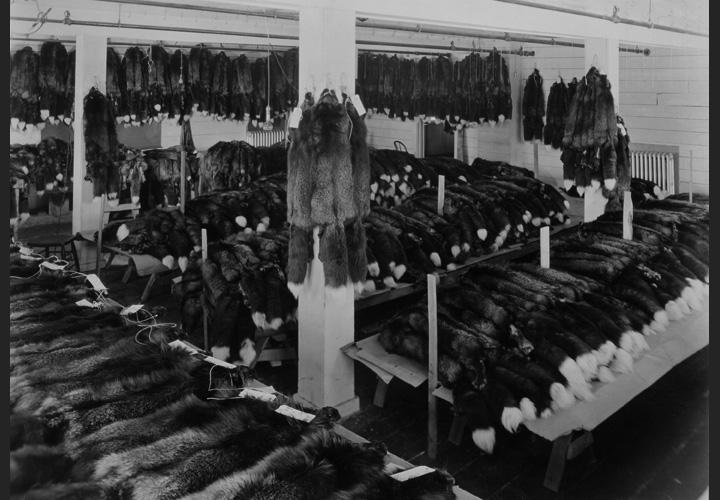 Fromm History - Bundled Pelts
