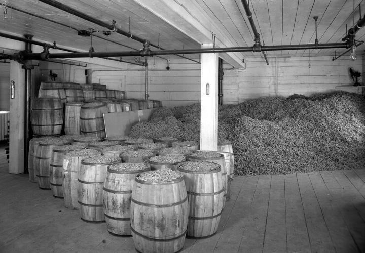 Fromm History - Ginseng Crop